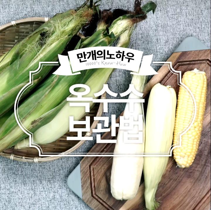옥수수 보관법
