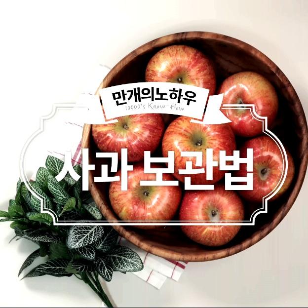 사과 보관법