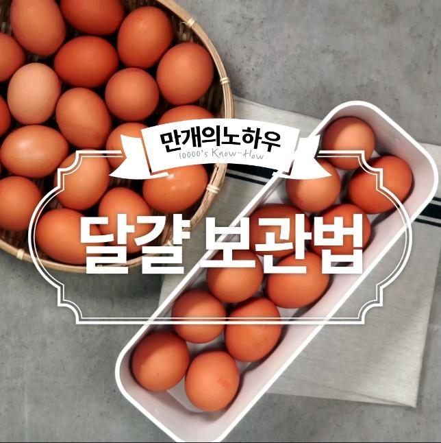 달걀 보관법