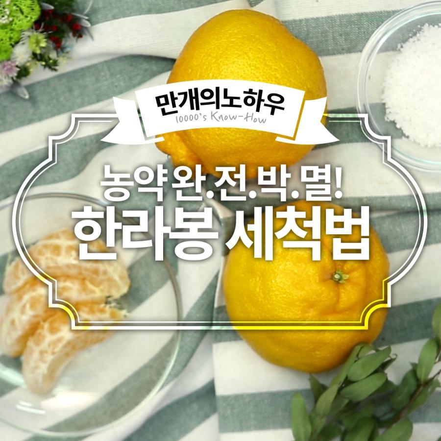 한라봉 손질법